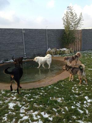 ?? Hunde, die über das Wasser laufen...??