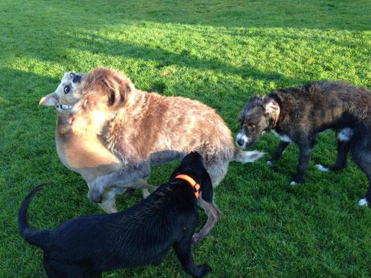 Geena, Max, Oskar und Struppi