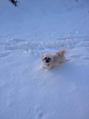 ... hab Geburtstag und ich liebe den Schnee ... 5J