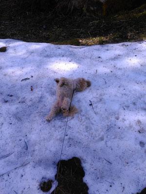 ... juhuuu ... hab grad noch Schnee entdeckt im Mai ... 9,4J