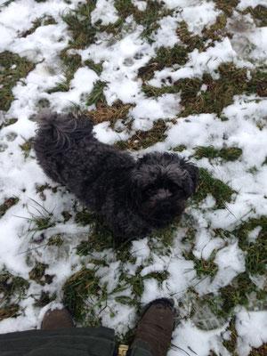 ... schnee ist lustig ... 5J