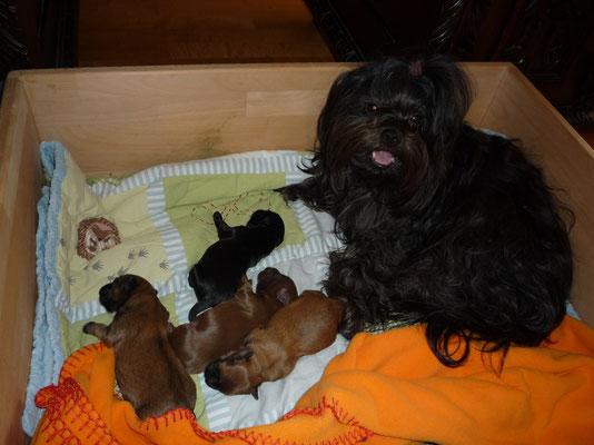 ... die stolze Mama mit ihren Babys 6T ...