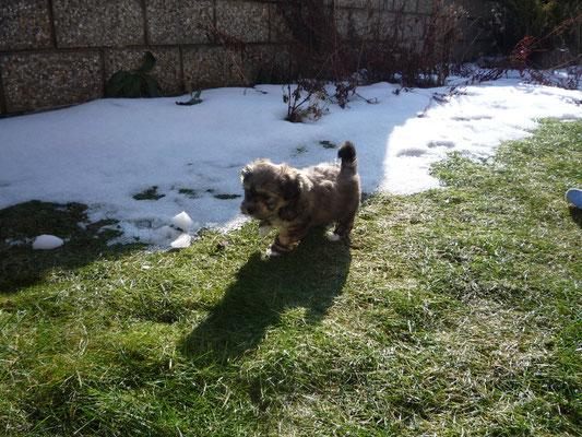 ... wau ... Gras und Schnee ... das macht Spass ... 6,5 Wo