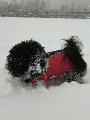 ... das ist ur anstrengend ... soviel Schnee ... 2J1Mo