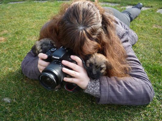 "... ""Hunde-Fotografen"" ... 6,5 Wo"