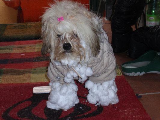... der Schnee hat mich fest im Griff ... 11,9 Mo