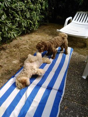 ... mein Bolli-Freund und ich in Italien auf Urlaub ... 9,8J