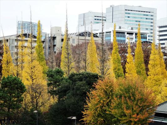 秩父宮ラグビー場の周囲は、紅葉も散り始め、初冬の気配