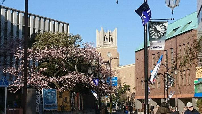 南門の早咲きの桜と大隈講堂