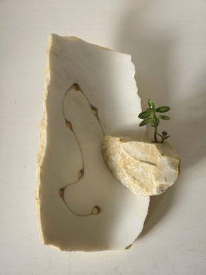 Giardino pensile - 2011 - Marmo  statuario, onice, colore e pianta grassa