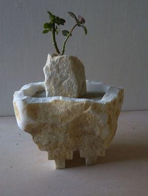 Giardino andino - 2013 - Marmo bianco, sabbia e pianta grassa