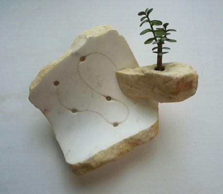 Giardino pensile - 2012 - Marmo  statuario, onice, colore e pianta grassa