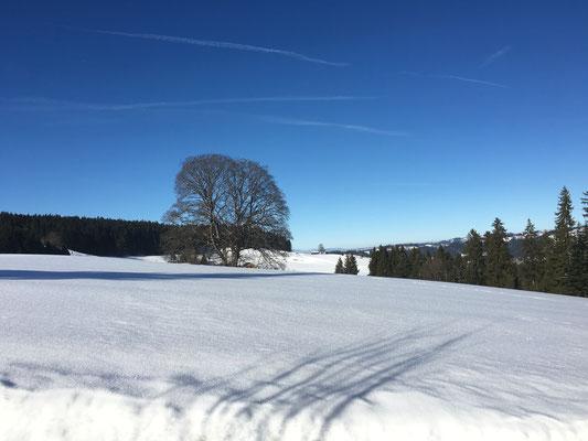Winter Ausblick Norden
