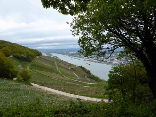 Blick rheinaufwärts Richtung Rüdesheim, welches aber noch hinter der Rheinbiegung verborgen ist