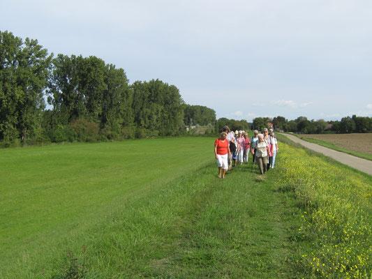 Unterwegs im Ried von Hofheim Richtung Worms