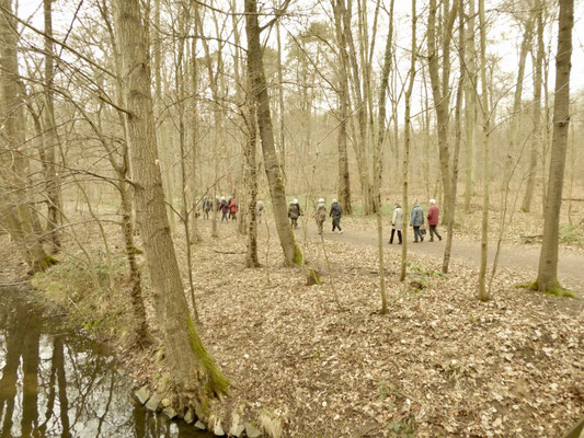 In dieser Jahreszeit bleibt man im Laubwald nicht unbeobachtet