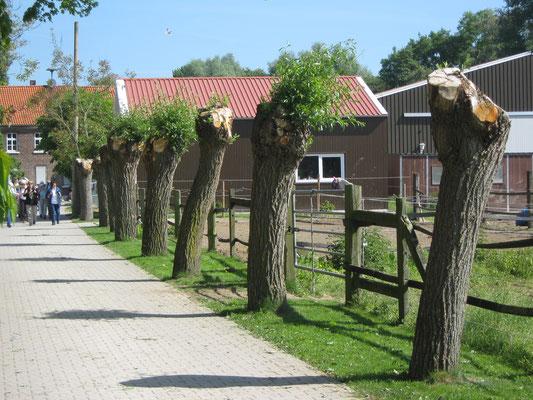 Am Pielerhof