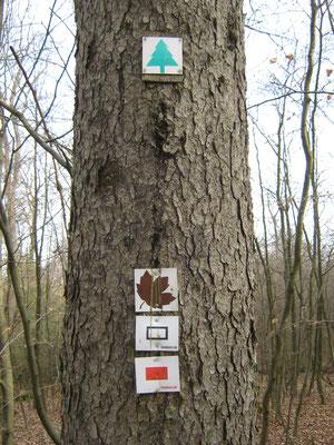 unser Wanderzeichen: das braune Ahornblatt
