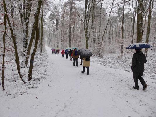 weiter geht es im Frankfurter Unterwald entlang der Grenzschneise