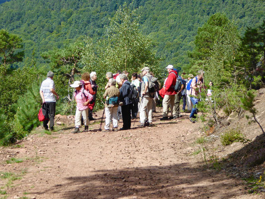 Anstieg zum Rehberg, vor Kurzem noch ein schmaler Pfad, nun vom Forst breitgeschoben