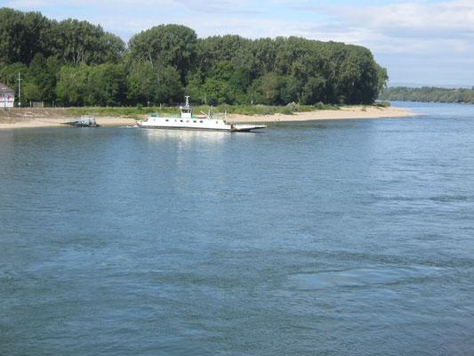 Die Fähre Altrip liegt am pfälzischen Ufer. Sie existiert seit 1362.