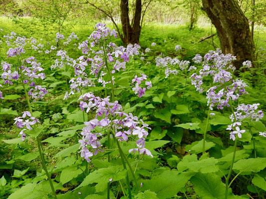 im Frühling grünt und blüht es