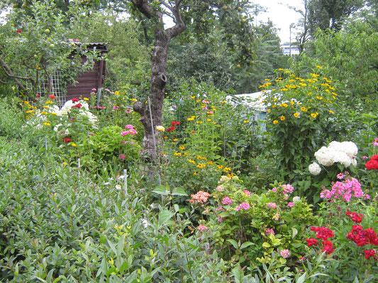 Prächtig blüht es in den Gärten.