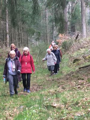 Unsere Kurzwanderer unterwegs bei Johanniskreuz.