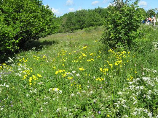 blühende Rhönwiesen