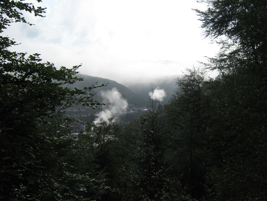 Blick ins Hochspeyerbachtal bei Frühnebel