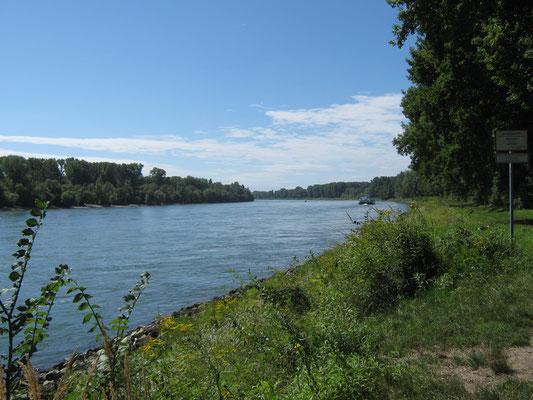 Der Rhein flussaufwärts von Rheinau