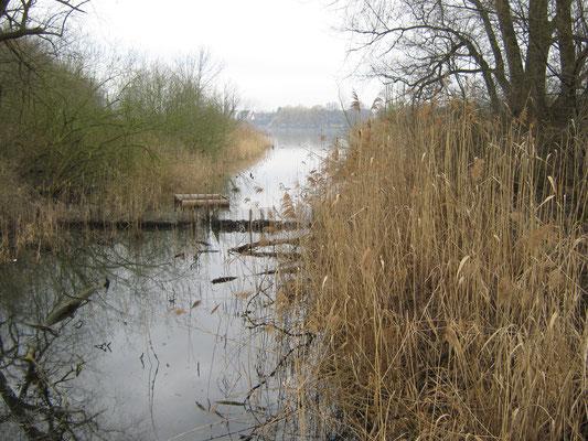 Die Isenach mündet in den Roxheimer Altrhein.