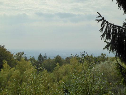 Blick über den Stadtwald in Richtung Wiesbaden