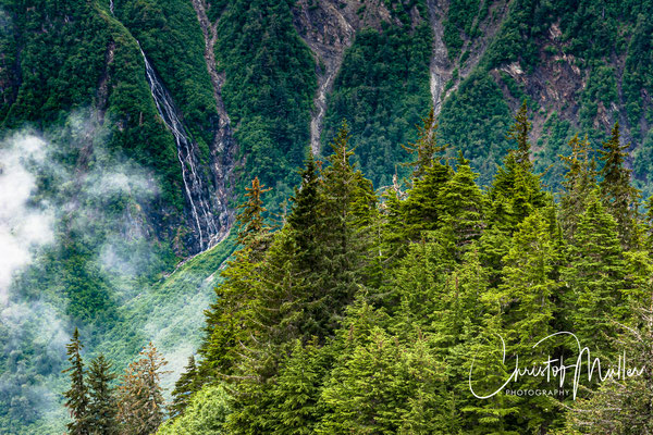 Scenery at Mount Roberts close to Juneau with abundant alpine flora and faune