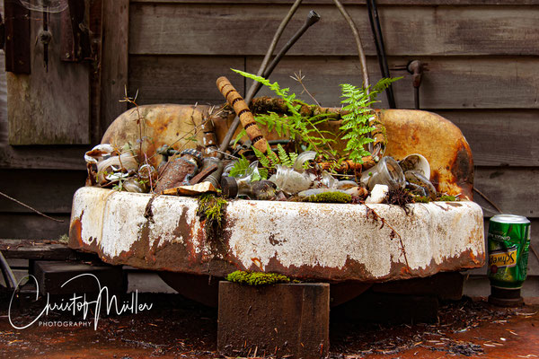 Nature claims back an abandoned sink in Petersburg