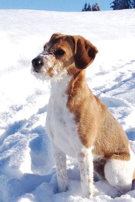 Amiro geniesst den Schnee...