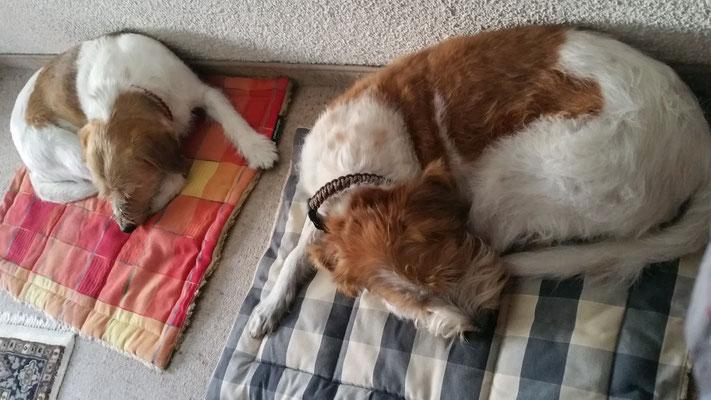 Abends noch zu Besuch bei unserer lieben Freundin...brav schlafen die beiden auf ihren Decken...