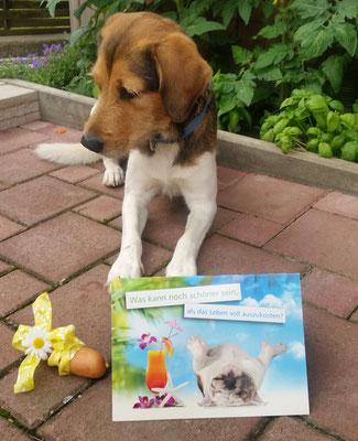 Asterix, mit Karte und Geburtstagswurst!