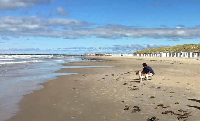 Wir geniessen die Strandspaziergänge und die Freude unserer Kromis, die einfach vor Glück fast platzen, weil es so toll ist am Meer...