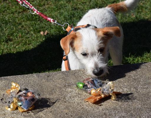 am Schluss durfte sich jeder Hund sein Osterpäcklein aussuchen...