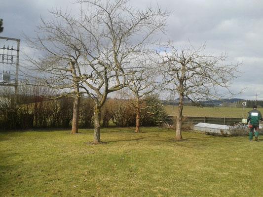 Obstbaumschnitt leicht und luftig