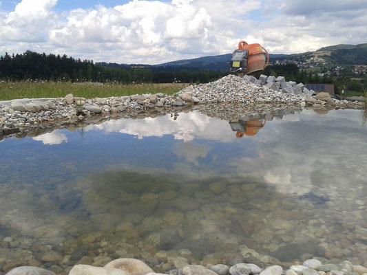 Gartenteich, Biotop