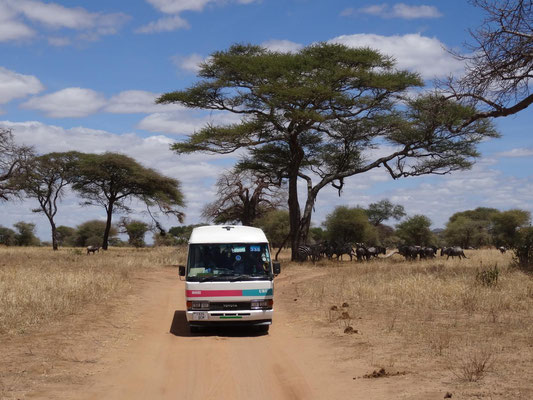 A bus in typical Moshi-Uru Dalla-Dalla-Outlook was used for the ride in Tarangire National Park.