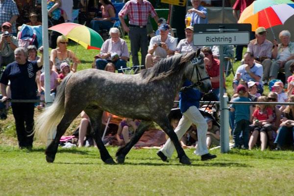 Kilnacasan Rannoch, Ponyfest Schönbach 2009 2. Platz Highlandponies