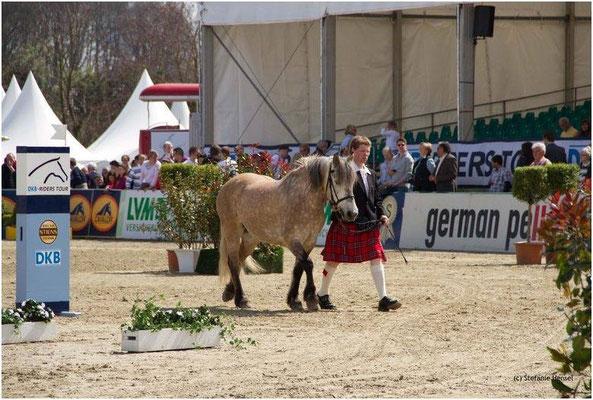 Kilnacasan Romeo, Horses & Dreams 2012