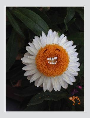 bloem 3