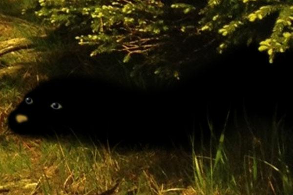 Black Otter