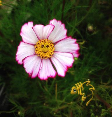 bloem 13