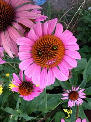 bloem 6
