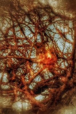 Meintree